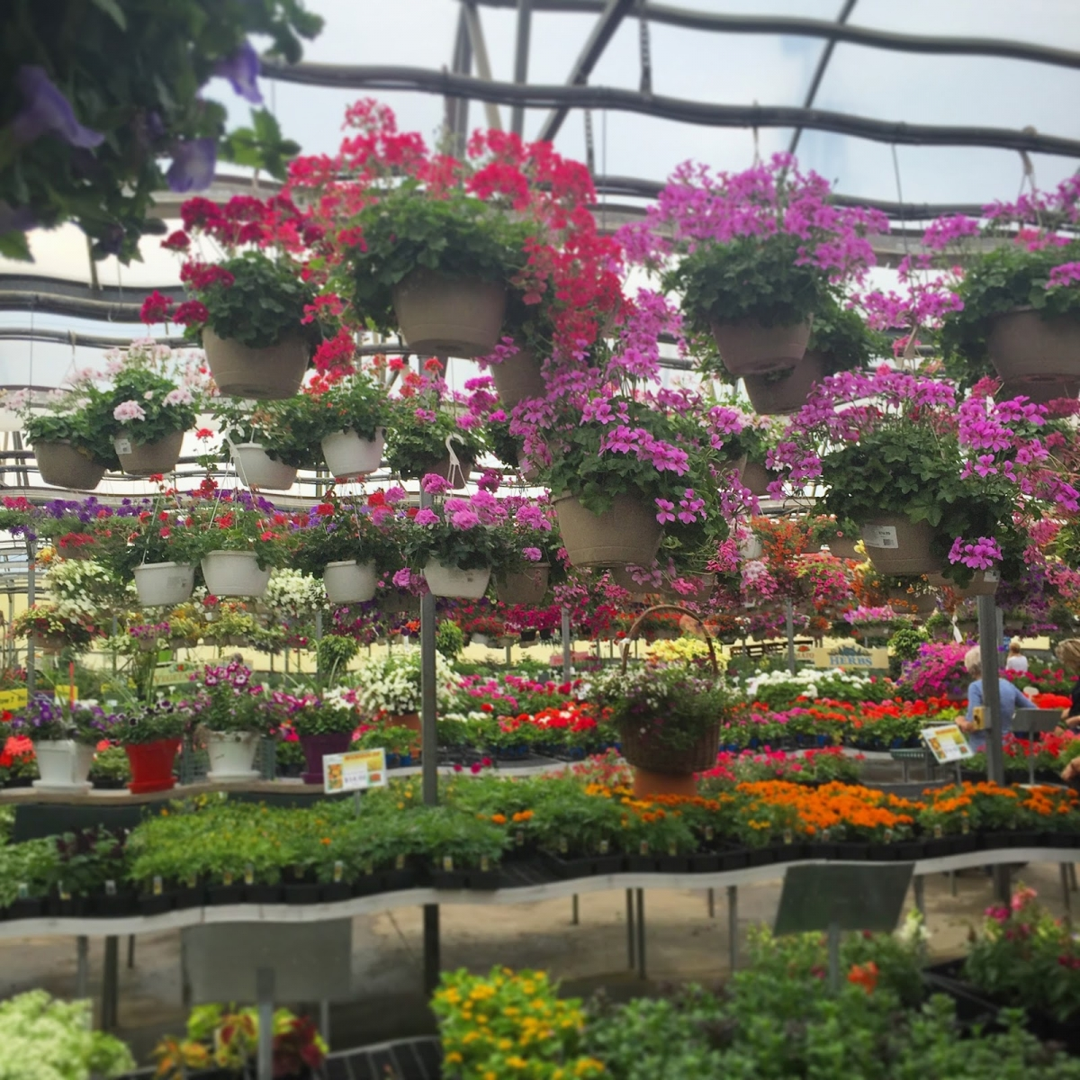 straders garden center columbus